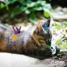 Atelier Herbe a chat en boule suspendue