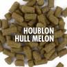Houblon HULL MELON (aromatique) pour brassage